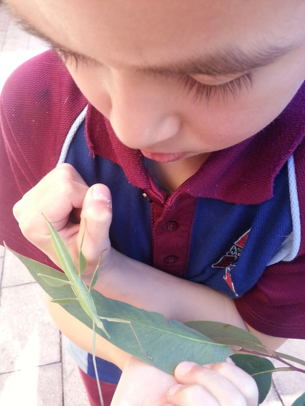 Stick Insect6
